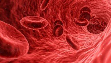 Photo of Vita di un globulo rosso