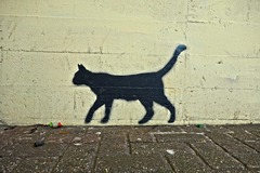 Photo of Se Pavlov avesse avuto un gatto