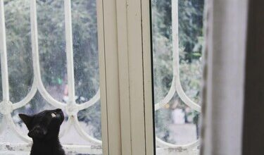 Photo of La leggenda del gatto nero: fra superstizione e fortuna