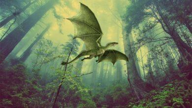 Photo of Un drago per amico: 5 animali fantastici che non conoscevi