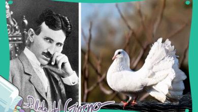 Photo of L'uccello di Tesla