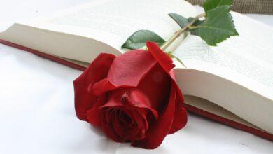 Photo of Sant Jordi: la festa dei libri e delle rose, tra leggenda e cultura.