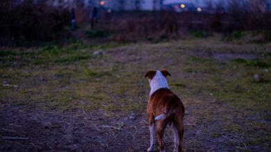 Photo of Dogman