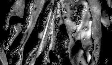 Photo of Gli alunni del sole: Venere