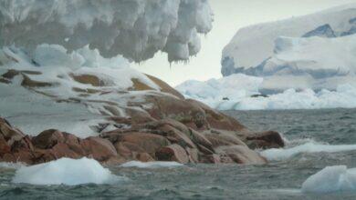 Photo of Scioglimento dei ghiacciai: in Antartide emerge una nuova isola