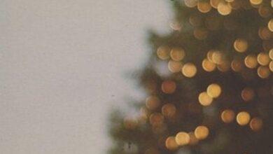 Photo of Cos'è l'otto dicembre e perché addobbiamo l'albero proprio in questo giorno?