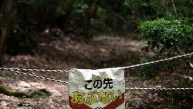 Photo of Luoghi da visitare una sola volta: la Foresta dei Suicidi