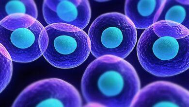 Photo of Medicina rigenerativa: tra cellule staminali e tecniche di clonazione