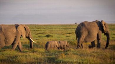 Photo of Gli animali e la morte: 4 specie che osservano il lutto