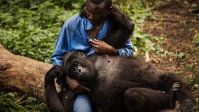Photo of Il parco nazionale Virunga e il coraggio dei suoi eroici ranger