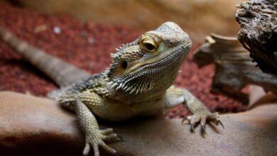 Photo of Cinque animali (più uno) che non soffrono il caldo
