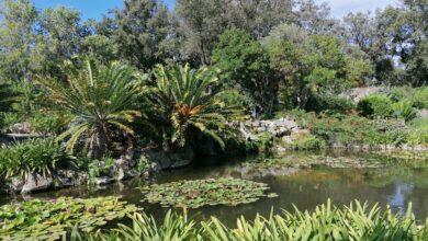 Photo of Dove si trova il paradiso terrestre? Ai Giardini La Mortella!
