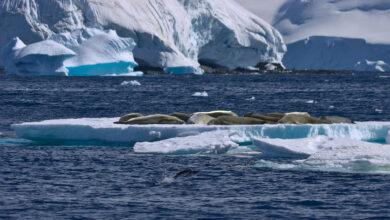 Photo of Oceano Meridionale: ufficialmente riconosciuto il quinto oceano della Terra