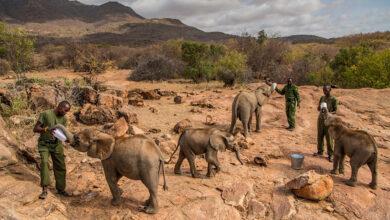 Photo of Elephant Sanctuary, i rifugi che proteggono dall'estinzione